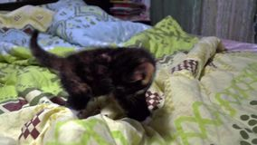 Small kitten plays on the bed stock video footage