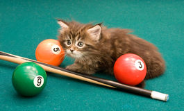 Small kitten plays a billiard table Stock Photography