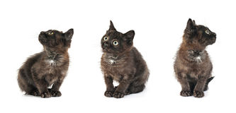 Small kitten positions Royalty Free Stock Photos