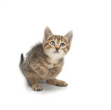 Small kitten prepared for jump Stock Images