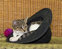 Small kitten is relaxing. Small adorable kitten is relaxing in a strawhead,looking for new adventures Royalty Free Stock Images