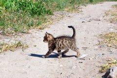 Small kitten is on the road Stock Photos