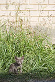 Small kitten at roadside Royalty Free Stock Image