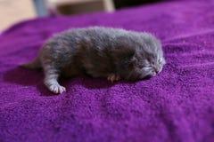 Small kitten runnig Stock Photo