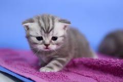 Small kitten runnig Stock Image