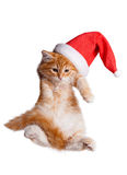 Small kitten in a santa hat. Stock Images