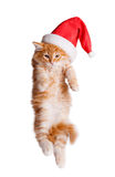 Small kitten in a santa hat. Stock Photography