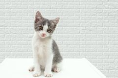 A small kitten sits on a curbstone. royalty free stock photos