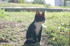 The small kitten sits on the grass royalty free stock photo