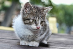 Small kitten sitting on a bench Royalty Free Stock Photography