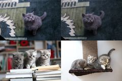 Small kitten sitting on a book, screen split in four parts Stock Photos