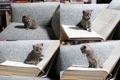Small kitten sitting on a book, screen split in four parts Royalty Free Stock Photo