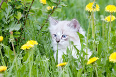 Small kitten sitting in flowers stock photography