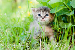 Small kitten sitting in the grass Royalty Free Stock Image