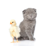 Small kitten sitting with newborn chicken. isolated on white Stock Photography