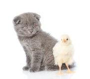 Small kitten sitting with newborn chicken. isolated on white Royalty Free Stock Photos