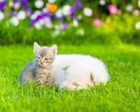 Small kitten sitting with sleeping puppy on summer grass Royalty Free Stock Photo