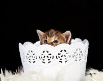 Small kitten sitting in a white basket Stock Photos