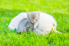 Small kitten sleep with puppy on green grass.  Royalty Free Stock Photography
