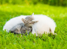 Small kitten sleep with White Swiss Shepherd`s puppy on green grass.  Royalty Free Stock Photos