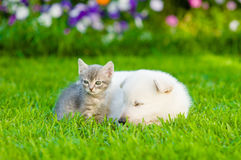 Small kitten sleep with White Swiss Shepherd`s puppy on green grass.  Stock Photography