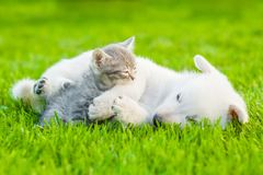 Small kitten sleep with White Swiss Shepherd`s puppy on green grass.  Stock Photo