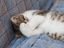 Small kitten sleeping with paws covering the muzzle on the sofa stock photography