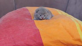 Small kitten sleeping on a pillow Stock Photos