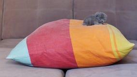 Small kitten sleeping on a pillow Stock Photo