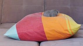 Small kitten sleeping on a pillow Stock Image