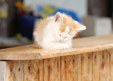 Small kitten sleeping on wood. Small red kitten sleeping on wood Royalty Free Stock Image