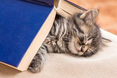 A small kitten sleeps, covered with a book. A strong dream afte royalty free stock photography