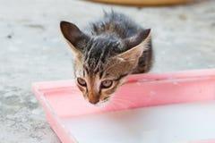 The small kitten. The small kitten drinks milk Stock Image