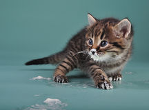 Small kitten with sour milk over face and paws Royalty Free Stock Photos