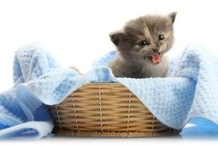 Small kitten in straw basket. Isolated on white Stock Images