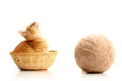Small kitten in straw basket. Isolated on white Royalty Free Stock Photos