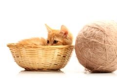 Small kitten in straw basket. Isolated on white Royalty Free Stock Photo