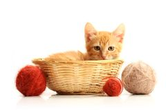Small kitten in straw basket. Isolated on white Royalty Free Stock Images