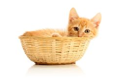 Small kitten in straw basket. Isolated on white Royalty Free Stock Photography