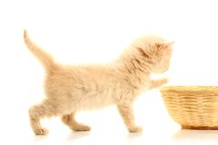 Small kitten and straw basket. Isolated on white Stock Photos