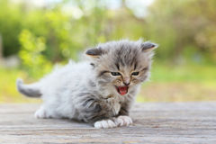 Small kitten. On table outdoors stock photos