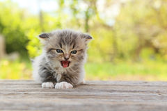 Small kitten. On table outdoors royalty free stock photography