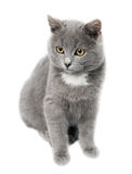 Small kitten on the white. Background Stock Images
