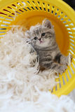 Small kitten among white feathers Royalty Free Stock Image
