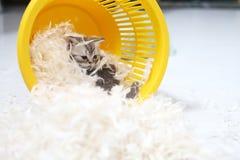 Small kitten among white feathers Stock Photo