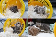 Small kitten among white feathers, screen split in four parts Stock Photography