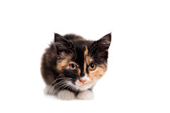 Small kitten on the white Royalty Free Stock Photos