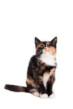 Small kitten on the white Royalty Free Stock Photo