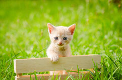 Small kitten in wood box Stock Photography