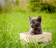 Small kitten in wood box Royalty Free Stock Photography